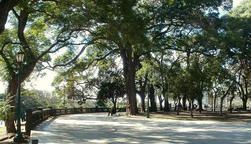 Plaza San Martin Ombu trees Buenos Aires