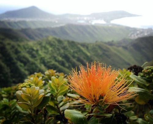 Lyon Arboretum kasvitieteellinen puutarha Honolulu Yhdysvallat.