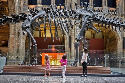 Natural History Museum Lontoo.