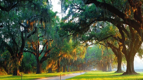 Boone Hall Plantation South Carolina Yhdysvallat.