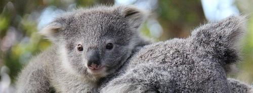 Tarongan eläintarha Sydney.