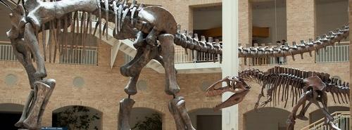 Fernbank Museum of Natural History Atlanta Yhdysvallat.