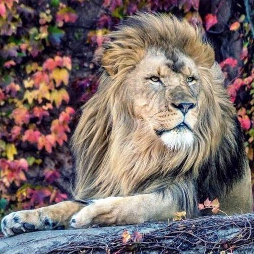 Lincoln Park eläintarha Chicago Yhdysvallat.